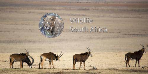 Billeder af dyreliv i Sydafrika